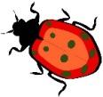 DirectAccess Bug